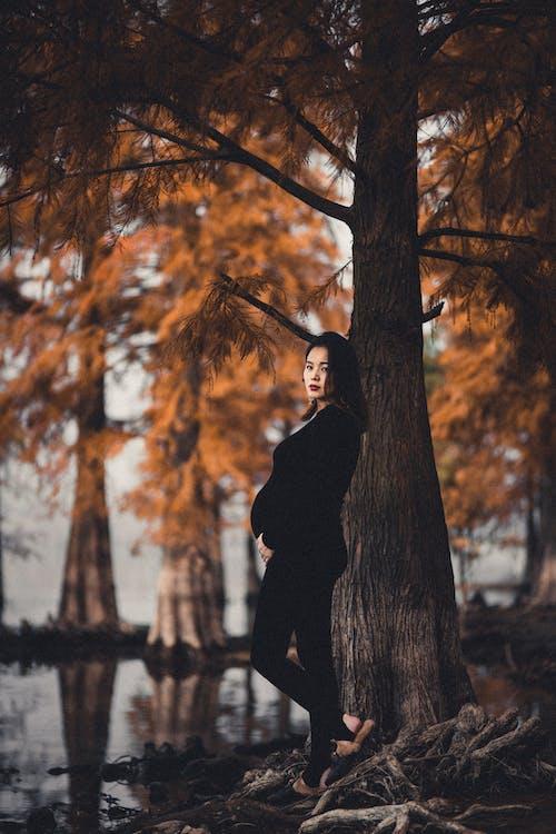 ağaç, bebek bekleyen, düşmek, fotoğraf çekimi içeren Ücretsiz stok fotoğraf