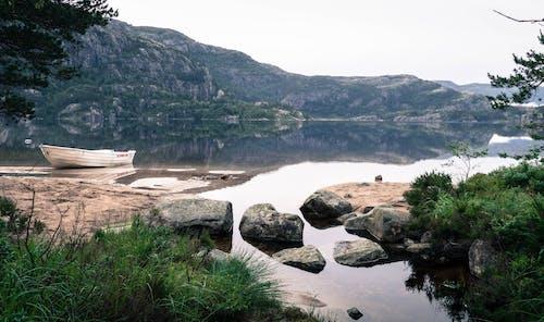 Darmowe zdjęcie z galerii z drzewo, góra, jezioro