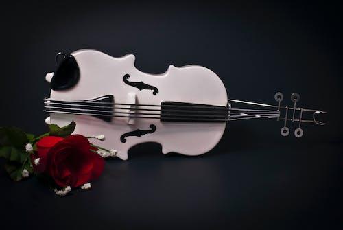 Gratis lagerfoto af violin, violon