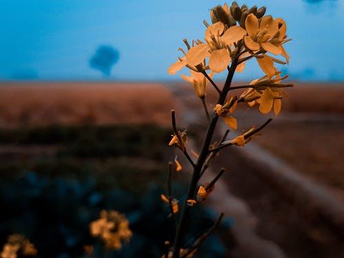 Foto stok gratis biru, bunga yang indah, kuning
