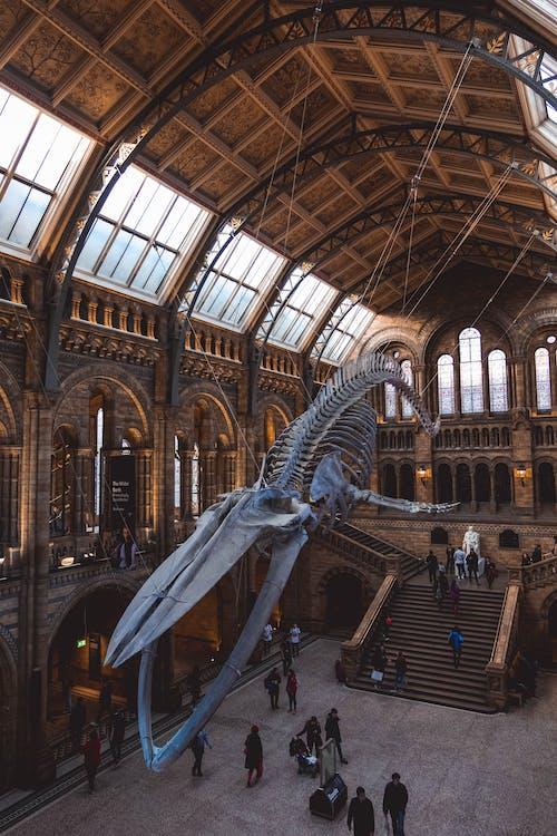 Základová fotografie zdarma na téma Anglie, architektonický návrh, architektura, Británie