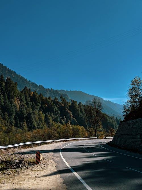 Foto profissional grátis de ao ar livre, árvores, asfalto, estrada