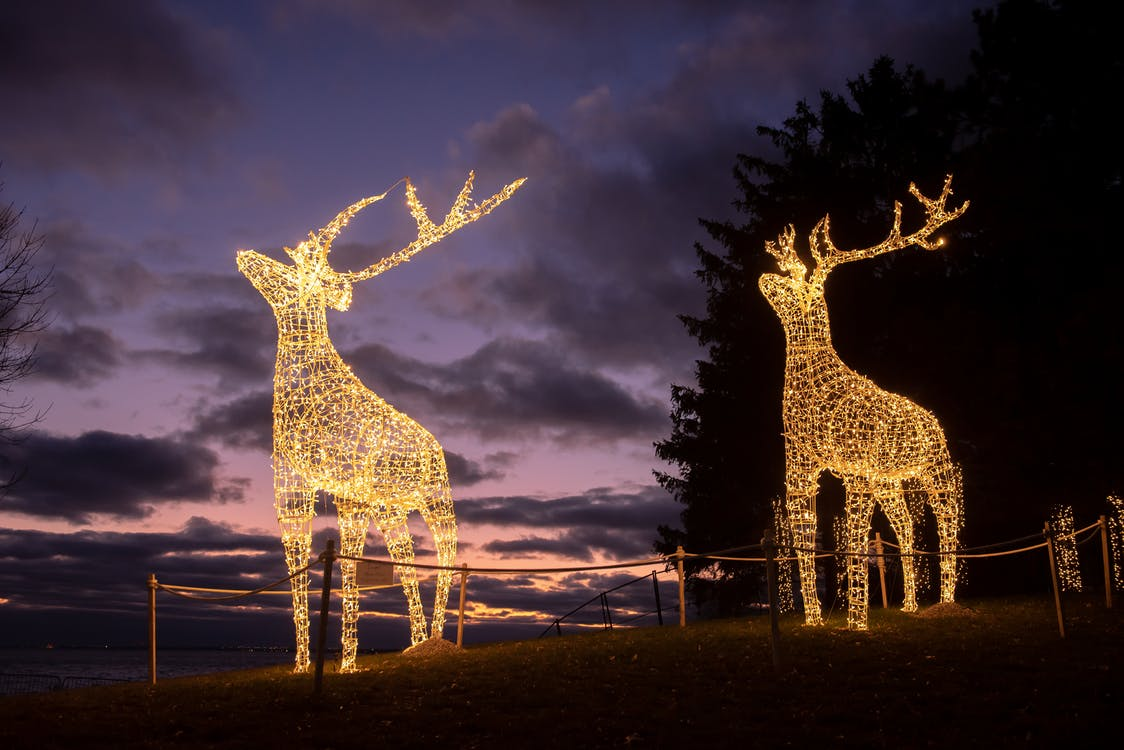 Lighted Deer Decors at Night