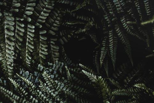 Gratis lagerfoto af 4k-baggrund, blade, bregneblad, bregneblade