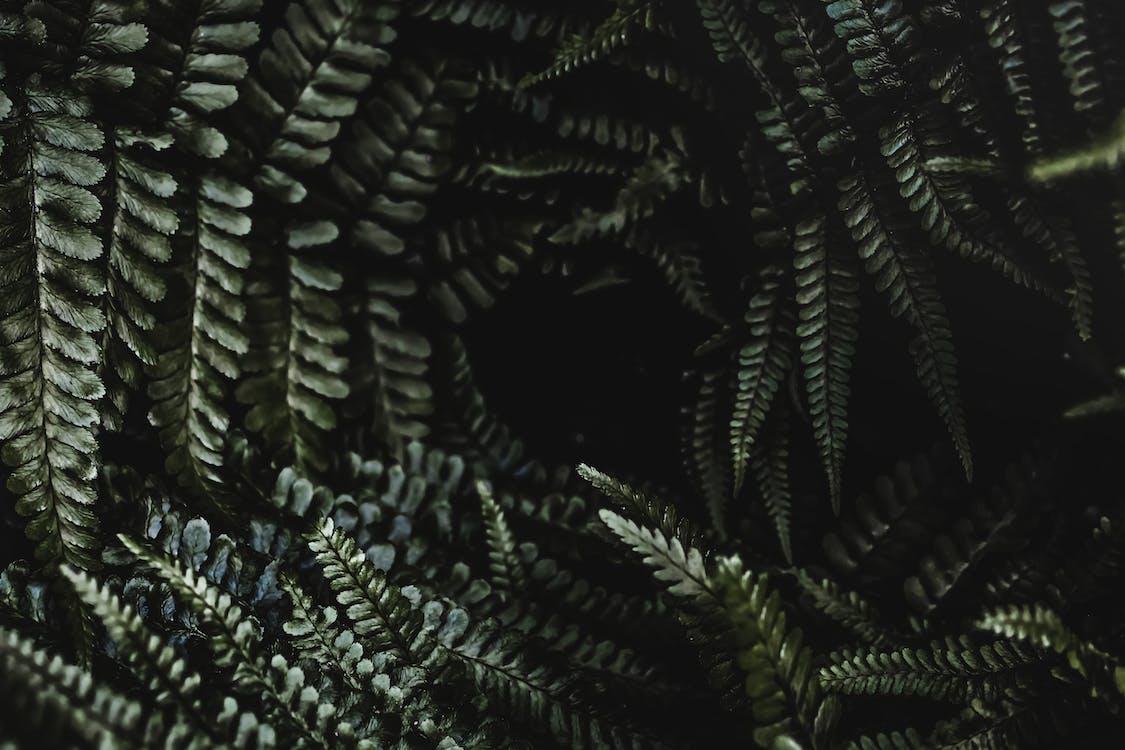 4k-baggrund, blade, bregneblad