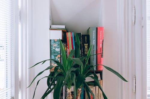 Green Leaf Plant Near Bookshelf