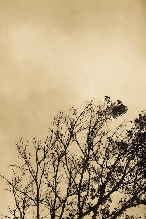 Kostnadsfri bild av höstlöv, molnig himmel, mörk, trädgrenar
