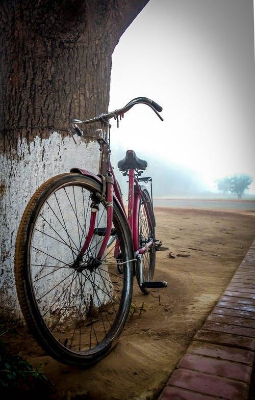 Foto profissional grátis de #beleza, #bicicleta, #natureza, #trees