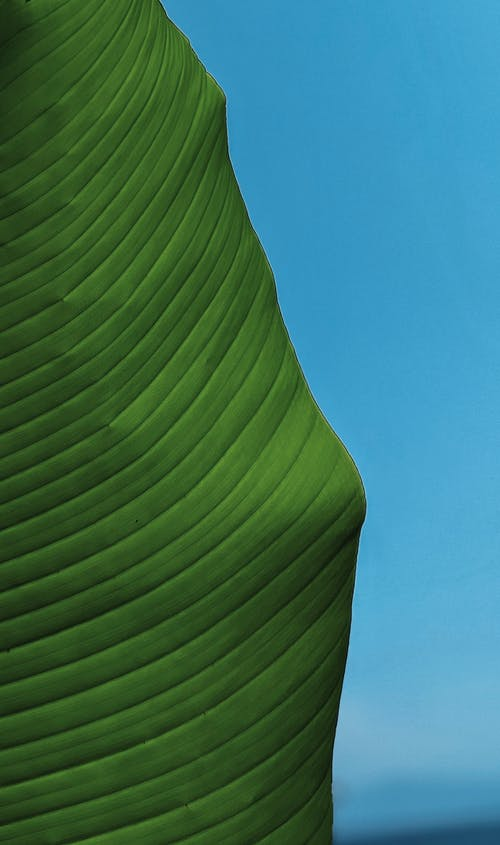 Green Leaf Under Blue Sky