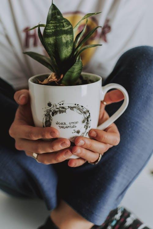 人, 人類, 咖啡杯, 坐 的 免费素材照片