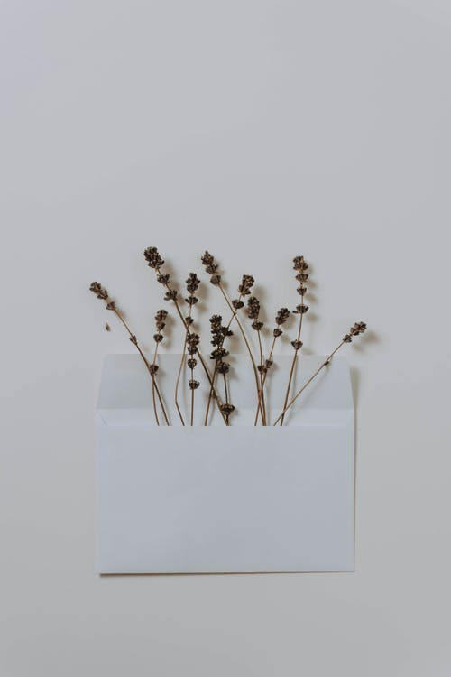 Flat Lay Photography of Withered Flowers in a White Envelope