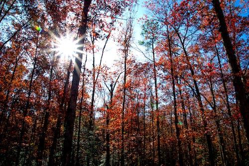 早晨的太陽, 森林, 福雷斯特, 秋天的心情 的 免費圖庫相片