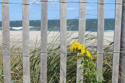 Free stock photo of beach, beach sand, dune