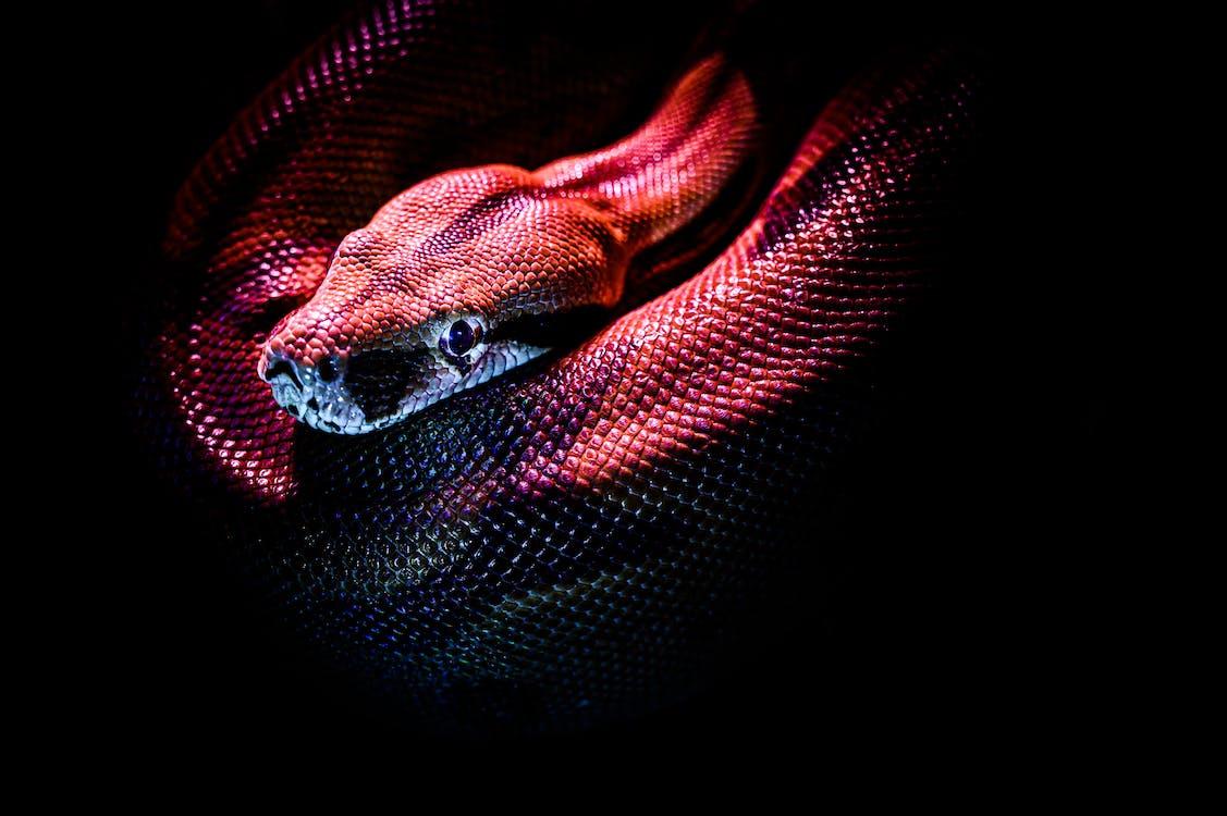 Photo D'un Serpent