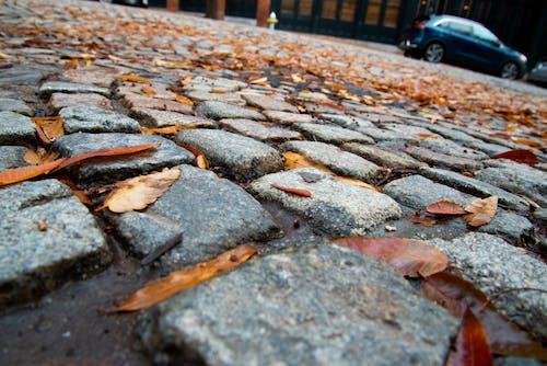 磚路, 秋天的心情, 鵝卵石街道 的 免費圖庫相片