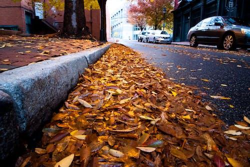 秋天的心情, 落葉 的 免費圖庫相片