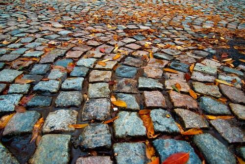 磚路, 秋天的心情, 秋天的顏色, 鵝卵石街道 的 免費圖庫相片