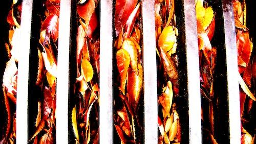 秋天的心情, 落葉落葉 的 免費圖庫相片