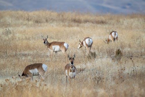 Herd of Deer on Brown Grass Field
