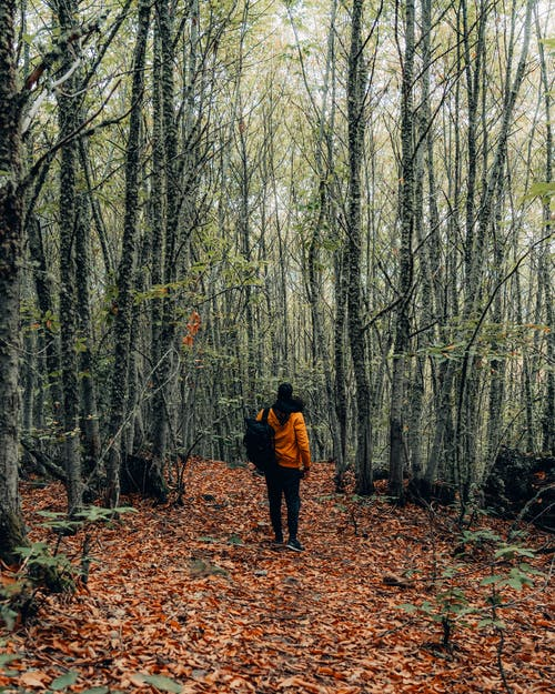 Man Standing in the Middle Of A Forest