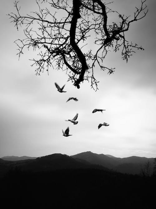 Ảnh lưu trữ miễn phí về bay, bóng, cành cây, chim