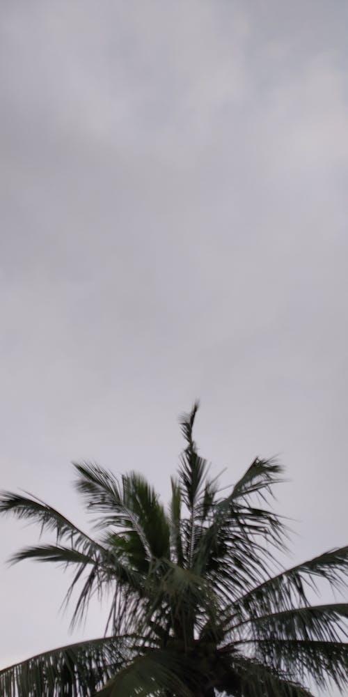 Fotos de stock gratuitas de aceite de coco, blanco, cándido