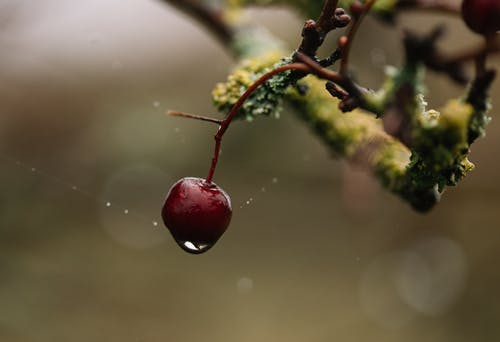 Lonely red forest berry hanging on branch