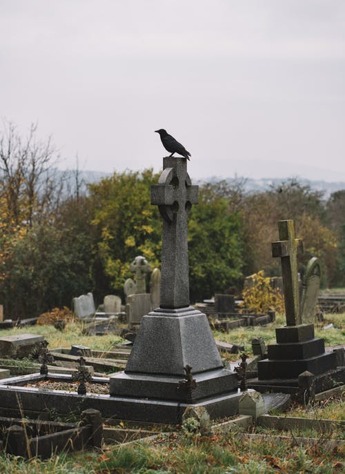 Crow sitting on stone cross of grave at cemetery overgrown with grass against green bushes on sunny day