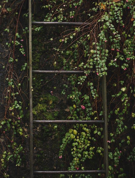 Ladder on Vines