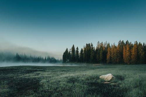 天性, 常綠, 景觀, 有霧 的 免费素材照片