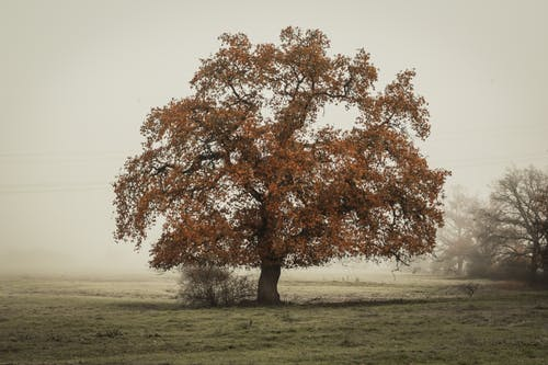 In Distant Photo of Tree on Landscape Field