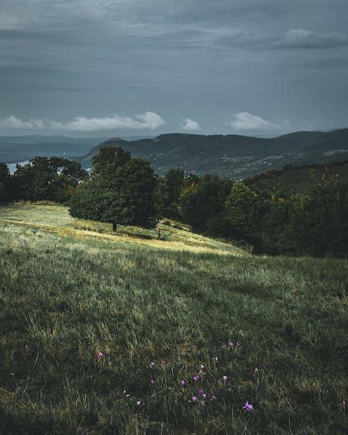 Immagine gratuita di alba, Budapest, campagna, campo