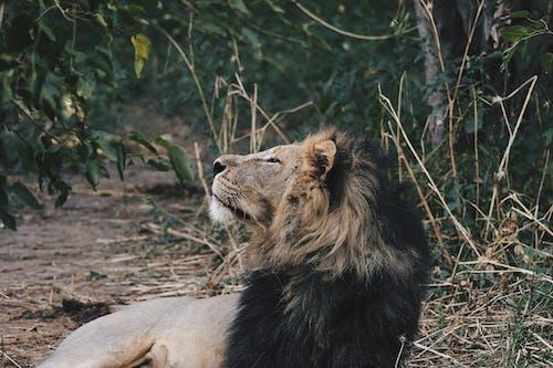 고양이, 동물, 동물원의 무료 스톡 사진