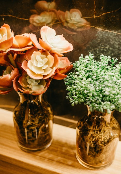 Orange Succulent Plant In Vase