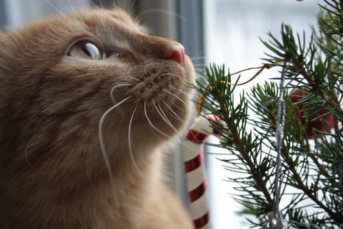 Kostenloses Stock Foto zu chrismas, кот, рождественское дерево