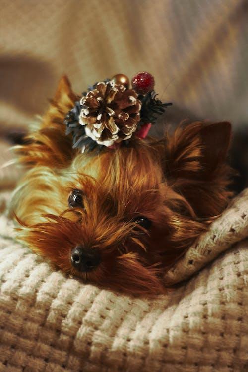 Foto profissional grátis de adorável, animal, animal de estimação, bicho