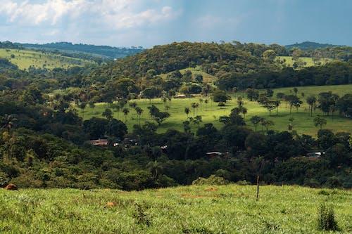 Fotobanka sbezplatnými fotkami na tému botanika, dedinský, divočina, divý