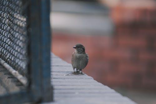 Kostnadsfri bild av baeutiful ögon, djur, fågel