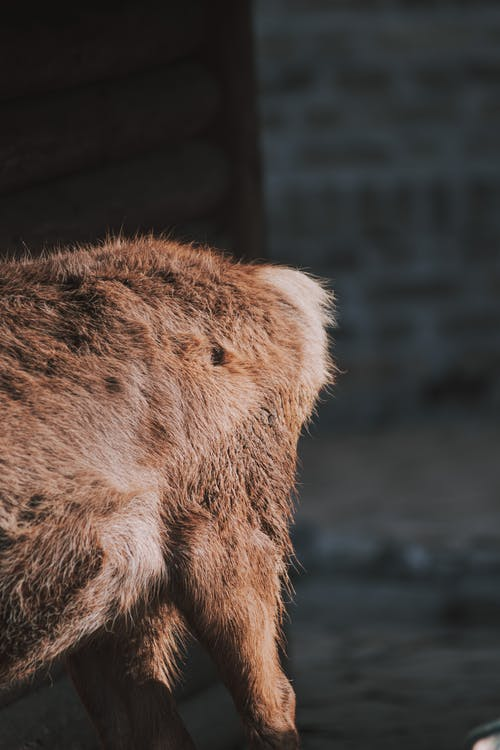Free stock photo of animal, animals, baeutiful eyes, big eyes