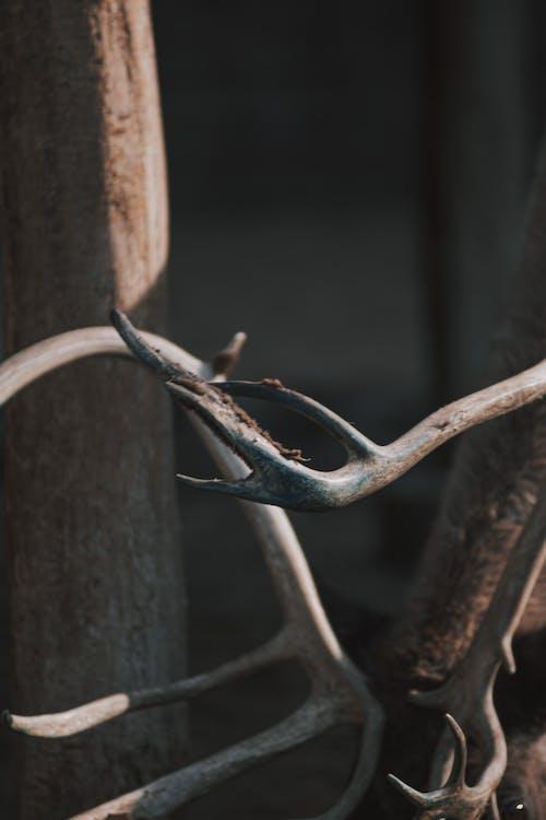 Kostnadsfri bild av äkta hjort, baeutiful ögon, djur