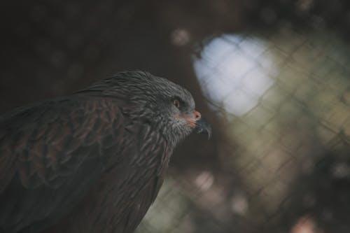 Kostnadsfri bild av djur, Örn