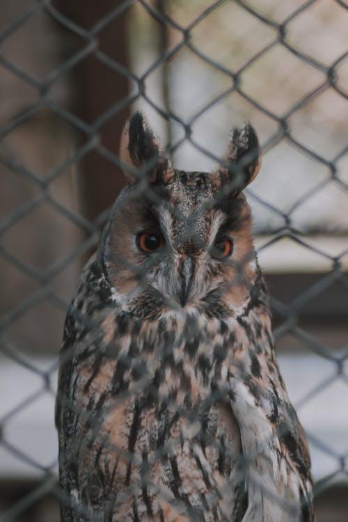 Free stock photo of animal, animals, owl
