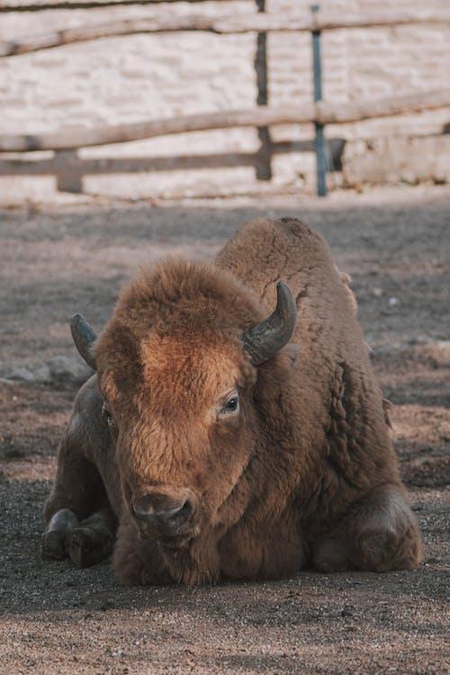 Free stock photo of animal, animals