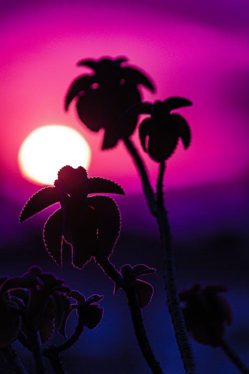 Gratis lagerfoto af blomst, flora, morgengry