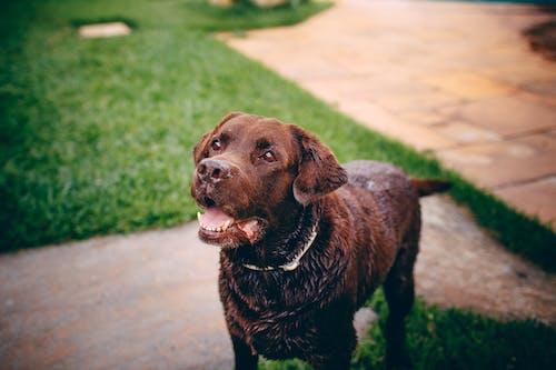 Fotos de stock gratuitas de al aire libre, animal, animal domestico, canino
