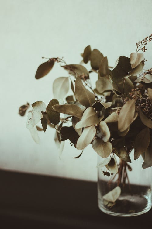 Free stock photo of bouquet, dry leaves, eucalyptus, greenery