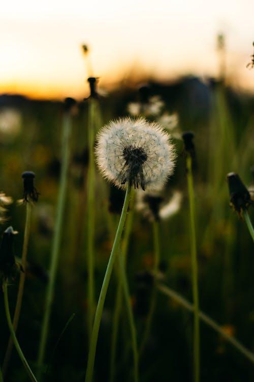 snowflowers, 原本, 喇叭水仙, 喜怒無常 的 免费素材照片