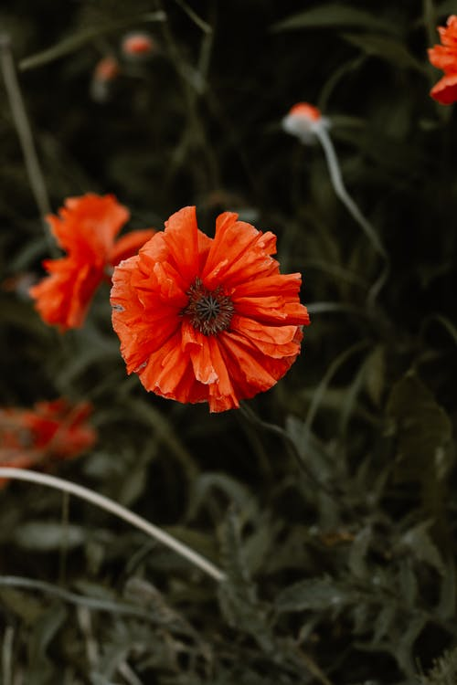 snowflowers, 原本, 喜怒無常, 夏天 的 免费素材照片