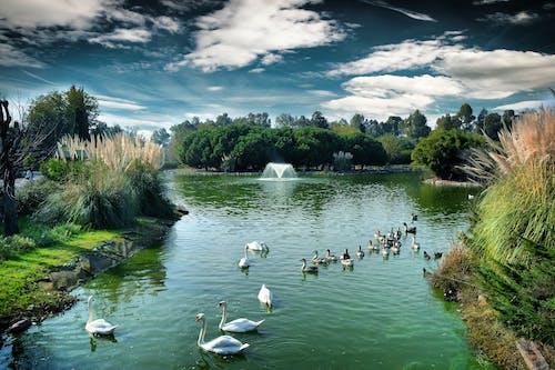 Základová fotografie zdarma na téma jezero, příroda, řeka, zoo