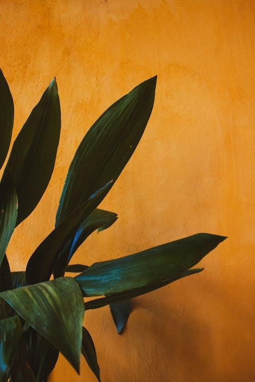 Gratis stockfoto met bladeren, close-up, donkergroen, fabriek